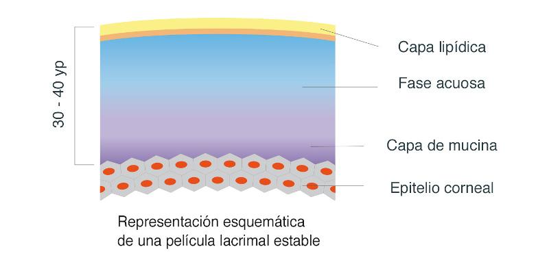 Resultado de imagen de pelicula lipidica